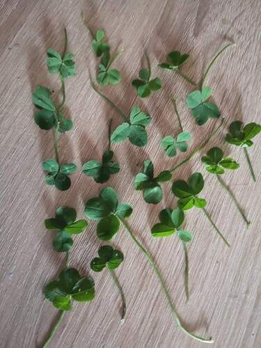 20 four leaved clovers