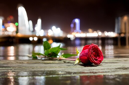 Rose in the city