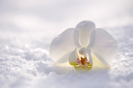 orchid-2952074_1920