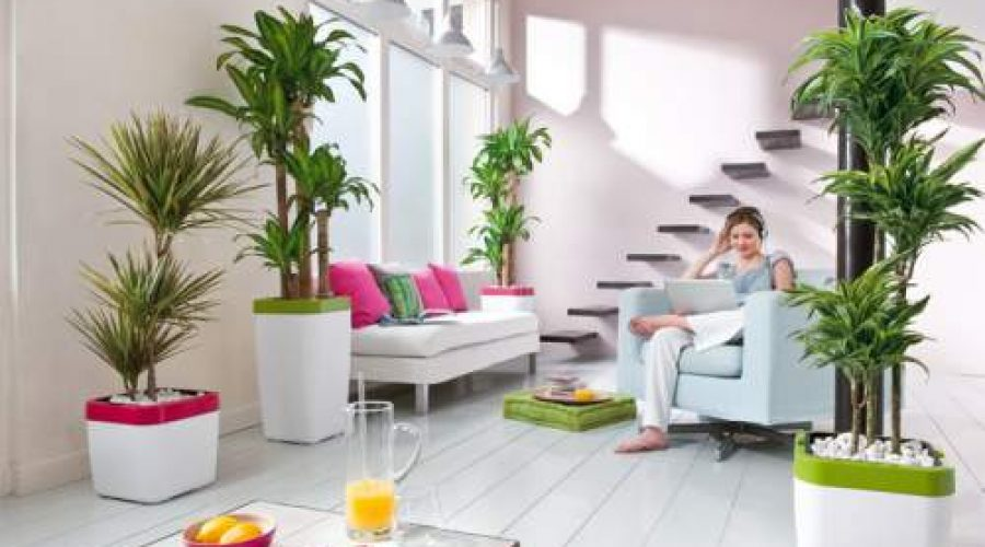 12-Plants-That-Bring-Positive-Energy-into-Your-Home-900x500