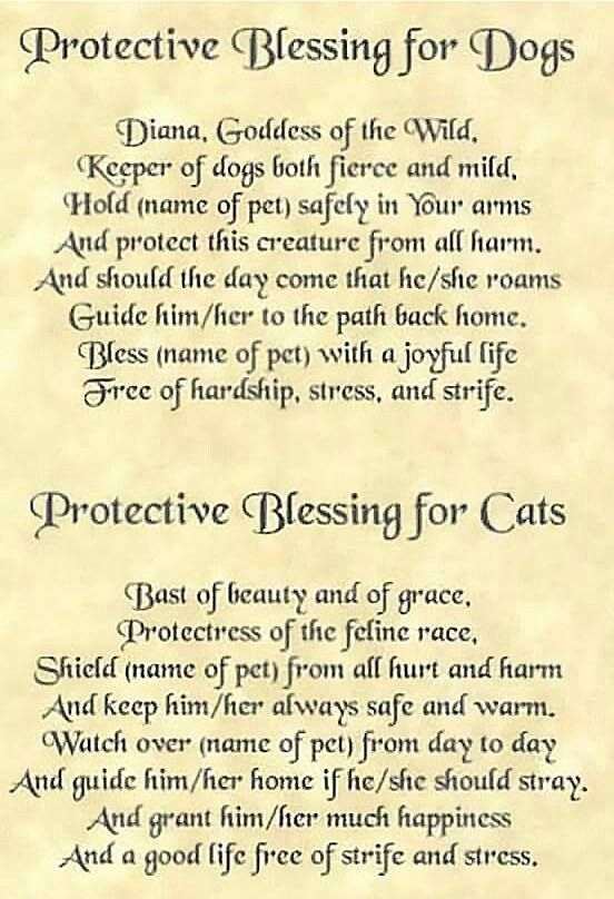 Protective pet blessings