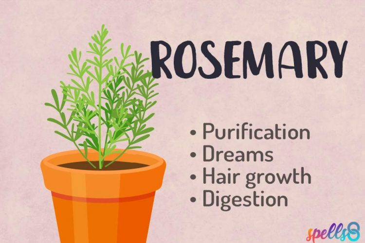 Rosemary-Herbal-Witchcraft-Course-750x500