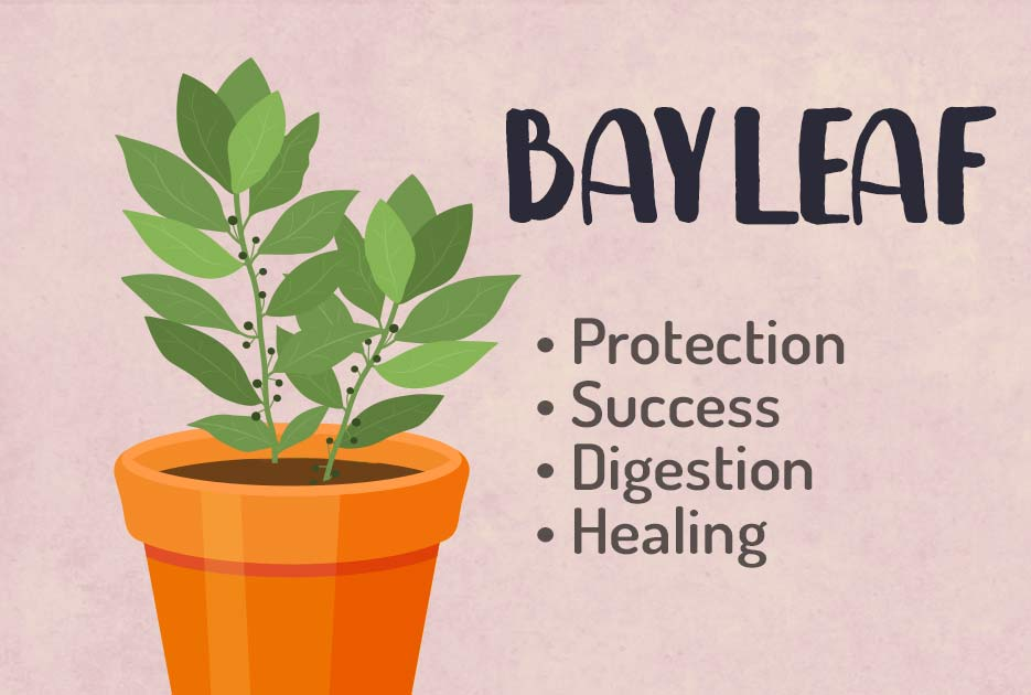 Bay-Leaf-Herbal-Witchcraft