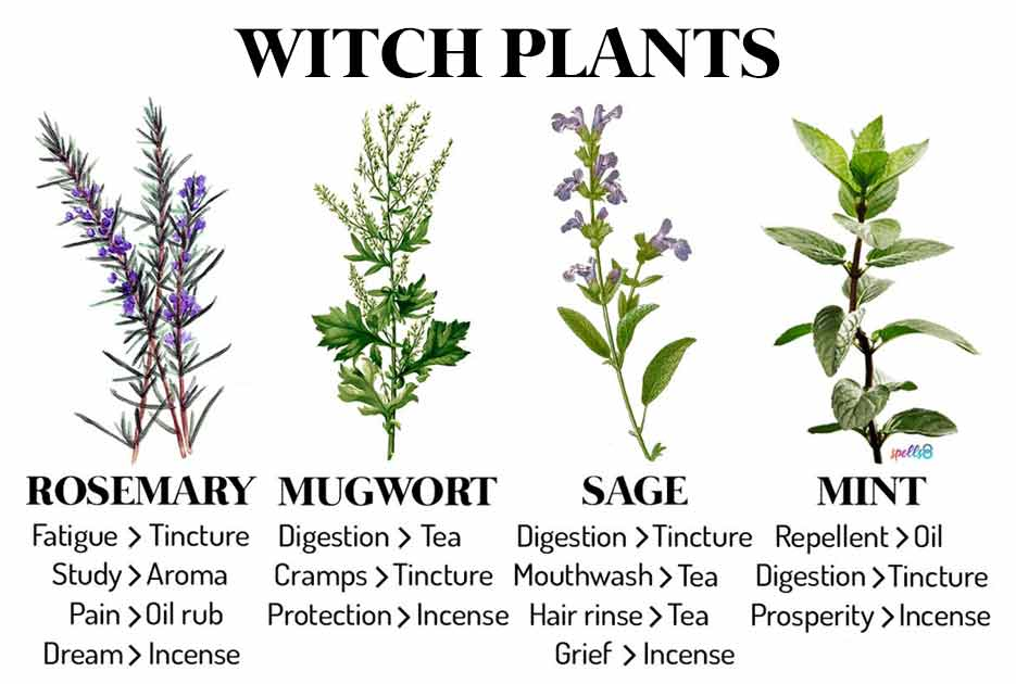 Witch-Plants-Herbs-Every-Witch-Should-Know